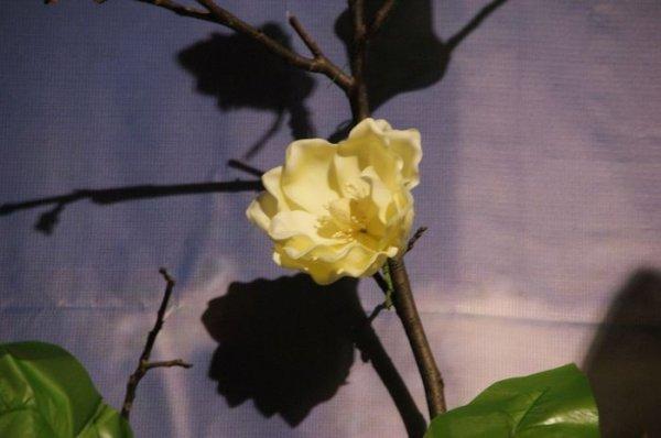 2011_04_42.jpg